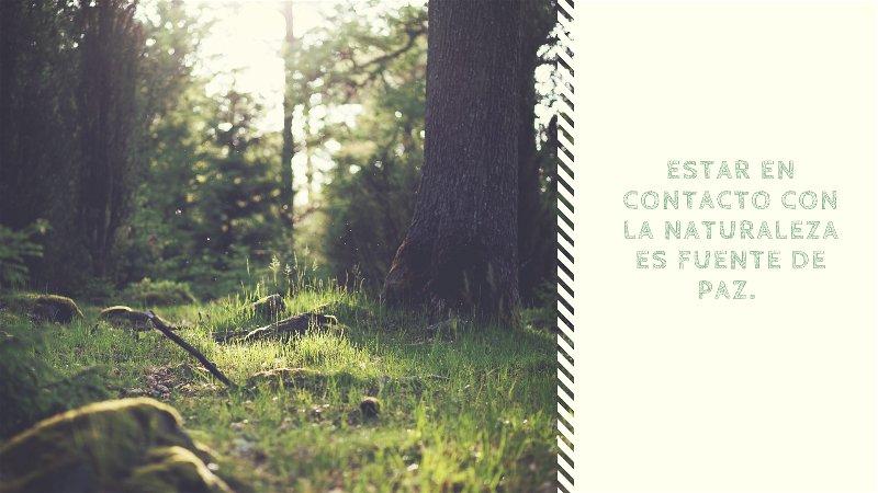 Frases sobre la naturaleza y el medio ambiente-opt